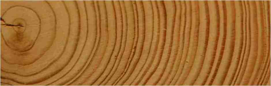 Die anwenderfreundliche Software für die Holzbranche